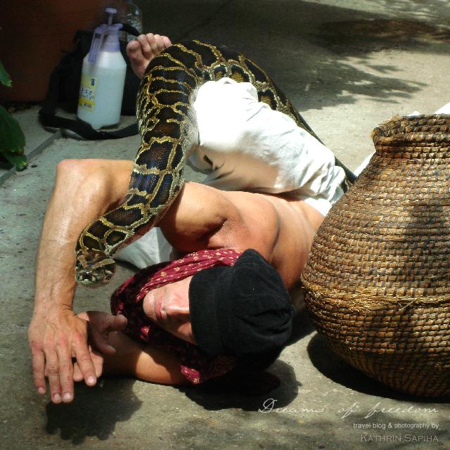 Rainer Kwasi and his python Brosche