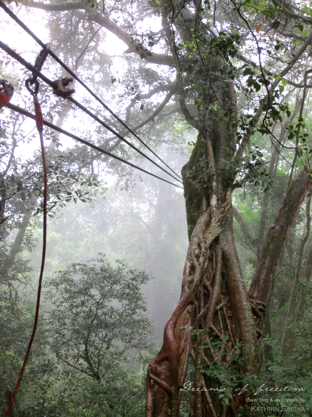 Mist in the rainforest - South Africa