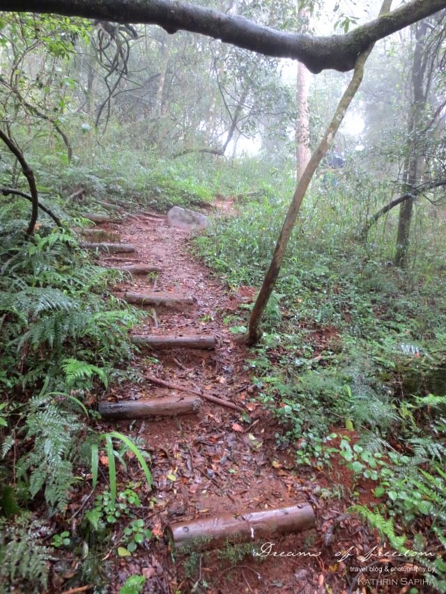 Jungle path in the South African rain forest