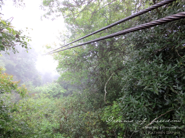 Zip Lining in the South African jungle - Karkloof Canopy Tour